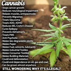 Cannabis~  Please share.  Thank You...   Alison Myrden Federal Medical Cannabis Exemptee in Canada Retired Law Enforcement Officer  AlisonMyrden.ca