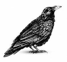 Gothic Raven Art images