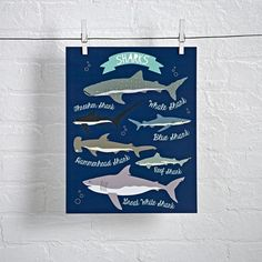 Shop I Love Sharks Wall Art.  Sharks may only get one week on TV, but they can be celebrated every day with this shark wall art.  It features six sharks illustrated by Lucy Darling.