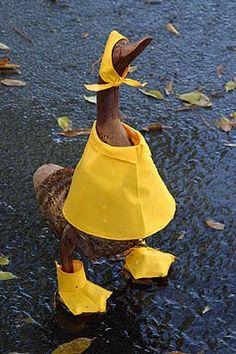 Wood duck with raincoat