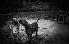Horses, Dogs, Animals, Animales, Animaux, Doggies, Horse, Animal, Animais