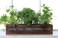 Here are the Indoor Garden Herb Diy Ideas. This post about Indoor Garden Herb Diy Ideas was posted under the category by our team at April 2019 at am. Hope you enjoy it and don't forget to share . Herb Garden In Kitchen, Diy Herb Garden, Kitchen Herbs, Edible Garden, Herbs Garden, Window Seal Herb Garden, Kitchen Garden Window, Kitchen Gardening, Gravel Garden
