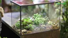 geometric  terrariums Terrarium Containers, Glass Terrarium, Terrariums, Planter Ideas, Ceramic Planters, Floating Frame, Classic Elegance, Plant Holders, Artificial Plants