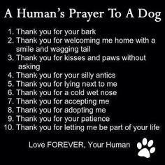 Pet prayer