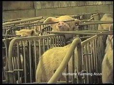 Nebraska Hog Factory - Part 1 Factory Farming, Nebraska, Don't Care, Crime, Health, Places, Health Care, Crime Comics, Lugares
