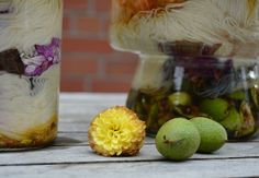 solar dyeing with walnuts, dahlia, onionskin and red Norway marple