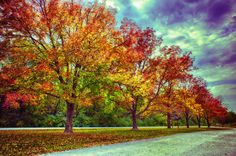 Bill Hampton Prints for Sale | ... Line At Busch Photograph - Autumn Tree Line At Busch Fine Art Print