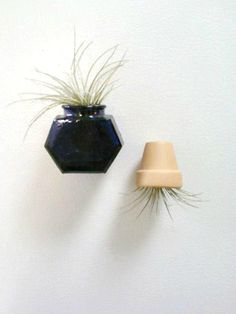 Magnet, Live Plant Magnet. Blue Glass, Mini Flower Pot, Air Plant Holder, Kitchen Magnet, Tillandsia. $20.00, via Etsy.
