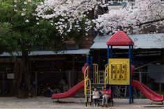 """ Shower of cherry blossom began "" 29.Mar.2013  お隣の小さな公園。桜吹雪が始まった!"