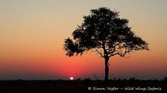 Wild Wings Safari offers unforgettable scheduled Kruger Park Safaris: 4 or - or you can custom your own. Expert, knowledgeable guides, open safari vehicles, overnight in Kruger itself for a real African safari experience. Dawn And Dusk, African Safari, Sunsets, Silhouettes, In This Moment, Park, Nature, Pictures, Outdoor