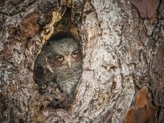 Highly commended. Photograph: Graham McGeorge/Comedy Wildlife Photography Awards