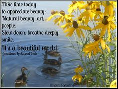 Take time today to appreciate beauty - Hayden Consulting - Dental Marketing Idea's