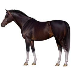 Ciuciu, Koń wierzchowy Koń pełnej krwi angielskiej Cremello #15801196 - Howrse