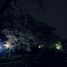 Nuit du printemps@GwangJin