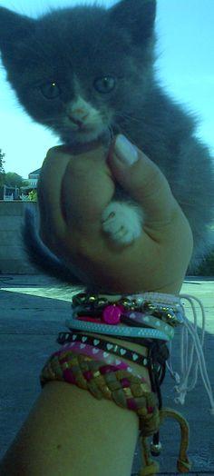 baby kitten love♥
