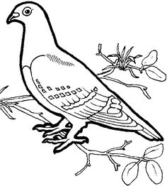 Dove Coloring Pages – coloring.rocks!