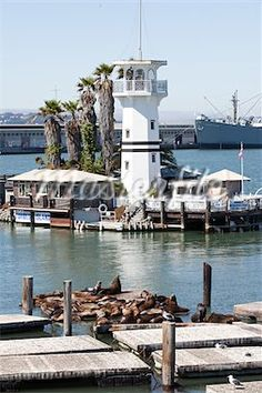 Forbes Island and Sea Lions at Pier 39, Fisherman's Wharf, San Francisco, California
