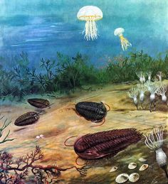 Cambrian explosion of Life on Earth