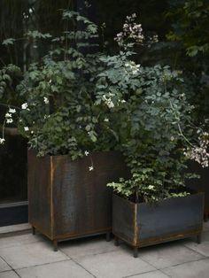 Potted Plants, Garden Plants, Room With Plants, Green Books, Iron Work, Green Garden, Window Boxes, Garden Inspiration, Outdoor Gardens