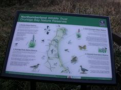 Druridge bay nature reserves