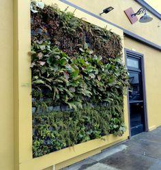 Door with green wall.