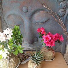 #flowering #azalea #kokedamas and #succulent kokedama #tinylittlekarma