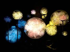 Whizz Pops by Bruce Munro. On view at Franklin Park Conservatory beginning September 25.  Photo by Mark Pickthall