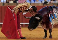Spanish matador Juan Jose Padilla leans on a bull during a bullfight at The Maestranza bullring in the Andalusian capital of Seville, southern Spain April 20, 2013. REUTERS-Marcelo del Pozo
