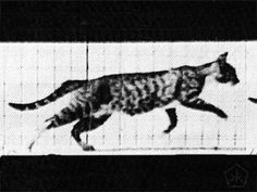An animated GIF of a cat galloping, created from Plate 719by Eadweard Muybridge (1887)inAnimal locomotion: an electro-photographic investigation of consecutive phases of animal movements, 1872-1885. The Cat GIF by E. Muybridge will be soon available on our handmade analog GIF player, The ...
