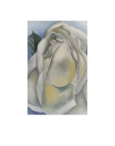 Georgia O'Keeffe - White Rose, 1928 - Art Prints and Posters via Phoenix Art Museum (My favorite O'Keeffe) Phoenix Art Museum, Georgia Okeefe, Rose Frame, New York Art, Art Institute Of Chicago, White Roses, White Flowers, Community Art, American Artists