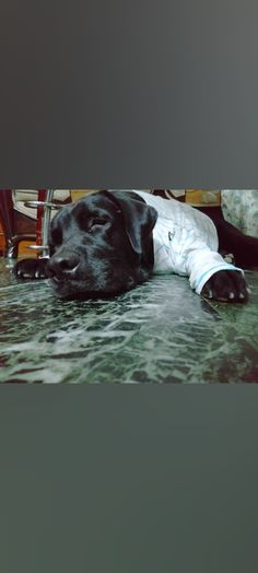 Lab Puppies, Black Labrador, Painting, Art, Funny Dachshund, Art Background, Black Labs, Painting Art, Kunst