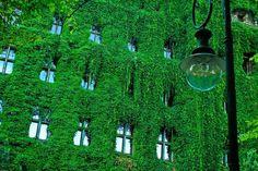 Szczecin, Poland Glass Building, Modern City, Modern Glass, Ecology, Poland, Greenery, Eco Friendly, World, Outdoor Decor