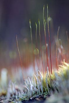 Red Grass and Lichen by Kerstin Hellstrom