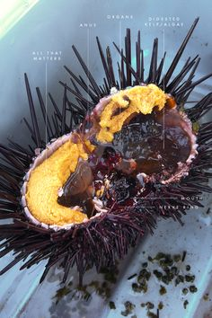 how to eat sea urchin roe