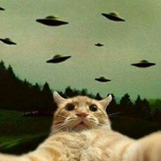 the day the earth stood still - selfie cat I Love Cats, Cute Cats, Funny Cats, Baby Animals, Funny Animals, Cute Animals, Trippy Cat, Gatos Cool, Photocollage