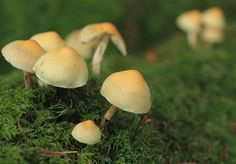 beige #mushrooms #nature #photography
