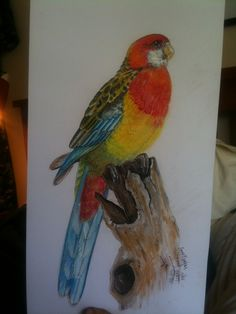 My bird drawing