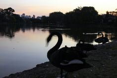 Parque Ibirapuera em São Paulo 26/06/2014  Pra quem gosta de Natureza aqui é o lugar pra está com familia.!!!
