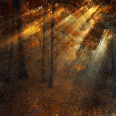 Shining forest by Ildiko Neer me > LOH shot 'in the kingdom of the pines' discovery scene