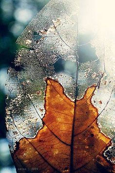 The Texture of the leaf CONTRASTS with the silhouette of itself and the blurred tress behind it.