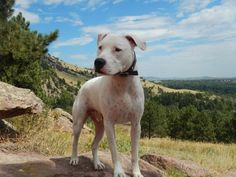 14 Ways To Celebrate National Dog Day