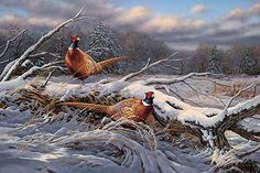Beyond the Storm-Pheasants by Rosemary Millette : Wild Wings
