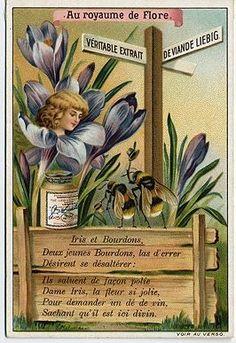 Gallery.ru / Фото #2 - Liebig Vegetable Extract trade card, Au royaume de Flore, 19 - Kalla