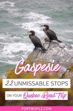 [Canada Quebec Travel] Get out of the big cities of Quebec City and Montreal and plan a perfect road trip to the Gaspe Peninsula! Follow route 132 and explore the many beautiful travel places on the south shore of St Lawrence River from Rimouski to Perce. This travel guide shows you why this is one of the best Canada travel road trips and all the unique things to do in Canada, including lighthouse hopping, whale watching, and more! #foodlover #canadatravel #traveldestinations #traveltips