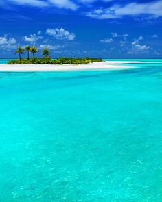 Coconut Palm Tree, Marine Conservation, Paradise Island, Island Life, Vacation Places, Vacation Destinations, Vacation Spots, Belize, Palm Trees