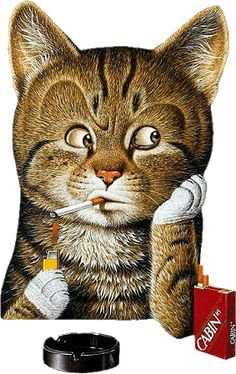 Animated Gif by Faye Rogers Campbell Cool Cats, I Love Cats, Animals And Pets, Funny Animals, Cute Animals, Animation, Gatos Cool, Cat Emoji, Kinds Of Cats