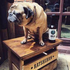 Neue Rösterei / Craft Beer / Ratsherrn / BRLO / Dogs