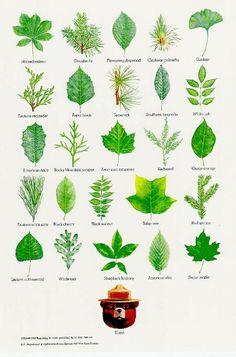 Tree leaf chart. by freida