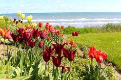 Coastal cottage gardens in Ireland, magical vacation rentals.