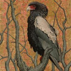 Bateleur Eagle #II, Oil and Gold Leaf on Canvas, 120cm by 90cm. (1205) by Marc Alexander